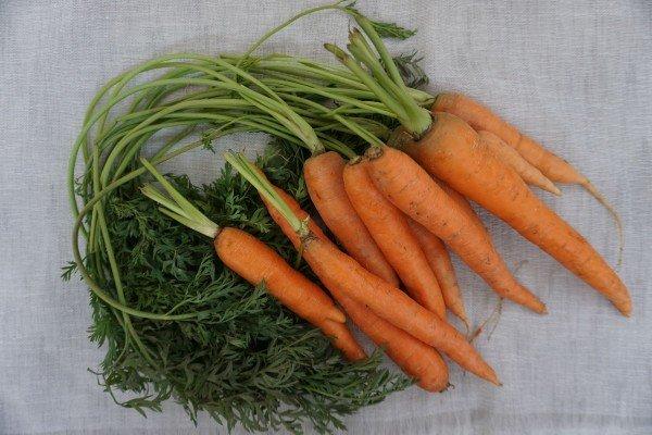 Καρότα Αργολίδας